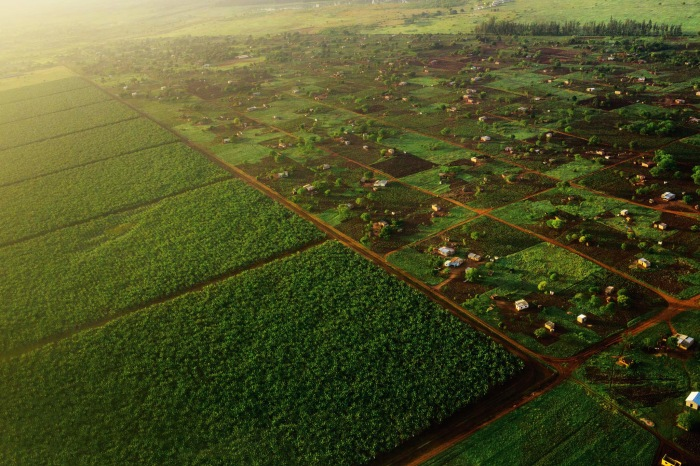 Two sides of land reform? Photo by Robin Hammond, National Geographic.
