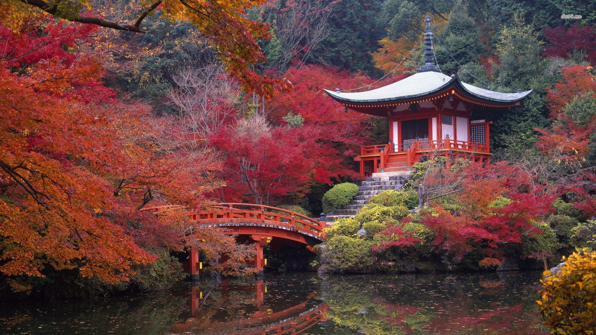 Kyoto johan fourie 39 s blog for Accessoire jardin japonais